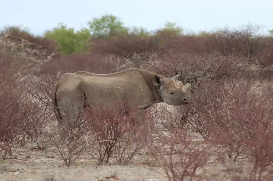 La Namibie, une destination de choix pour un voyage en Afrique