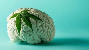 CBD et cerveau